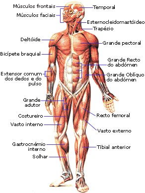controle muscular